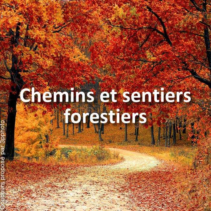 Concours Photo - Chemins et sentiers forestiers