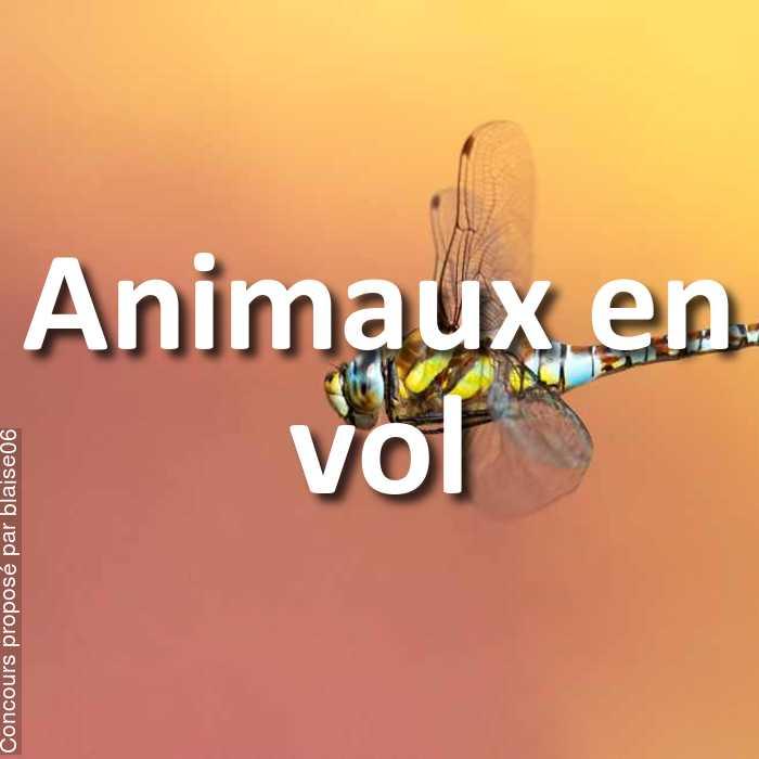 Concours Photo - Animaux en vol