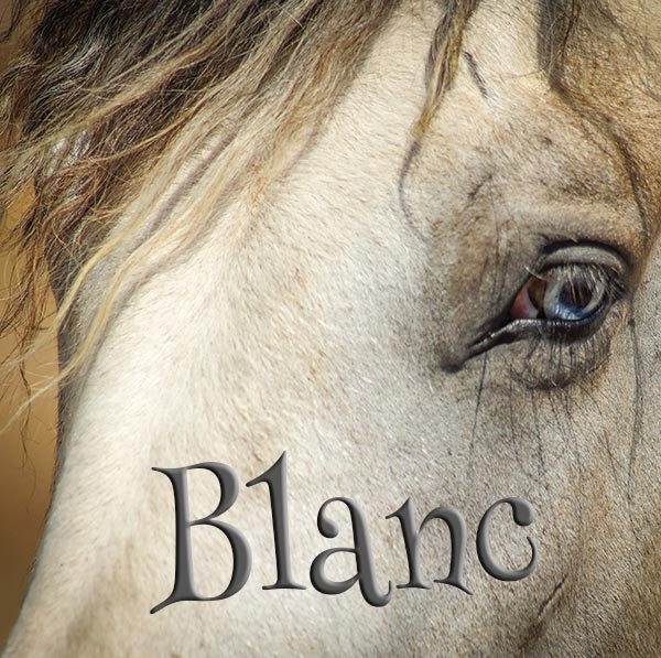 Concours Photo - Blanc