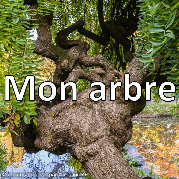 Concours Photo - Mon arbre