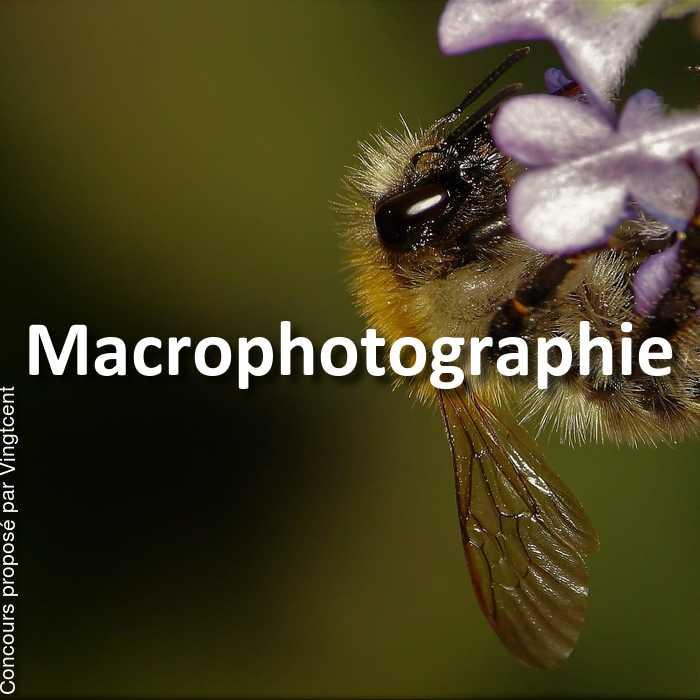 Concours Photo - Macrophotographie