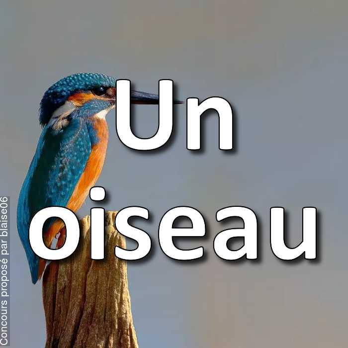 Concours Photo - Un oiseau