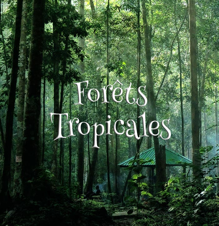 Concours Photo - Forêt tropicale