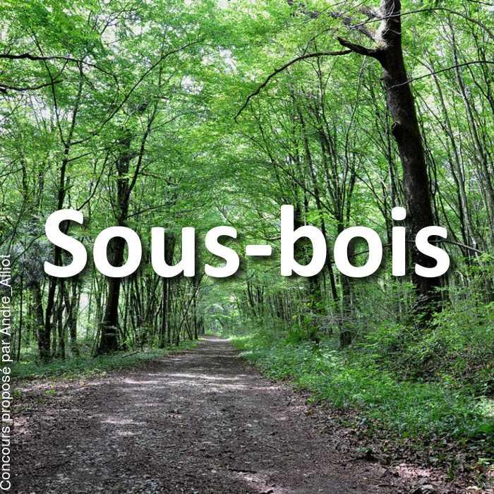 Concours Photo - Sous-bois