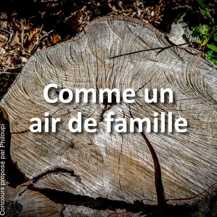 Concours Photo - Comme un air de famille