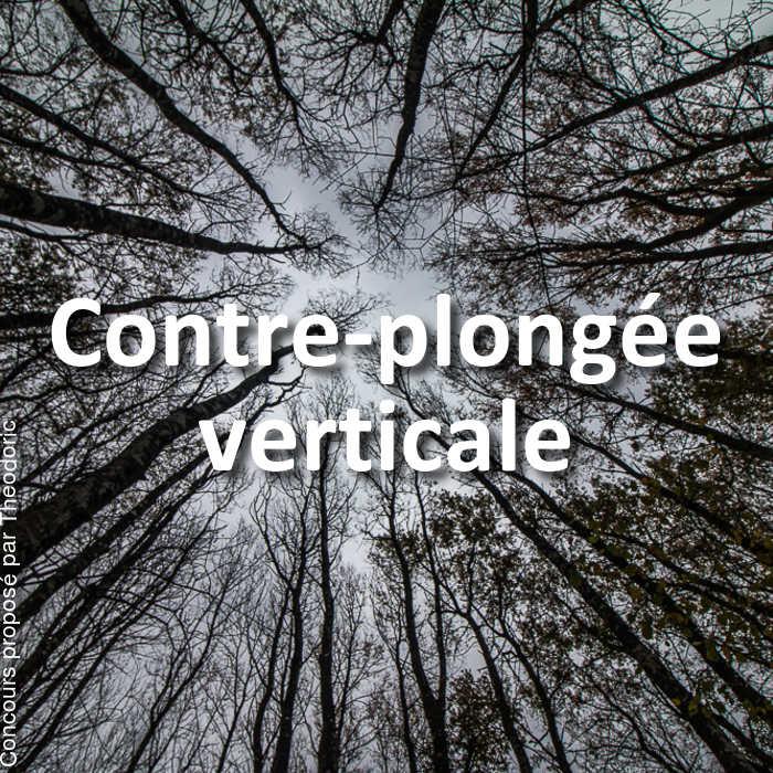 Concours Photo - Contre-plongée verticale