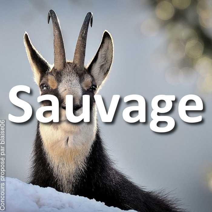 Concours Photo - Sauvage