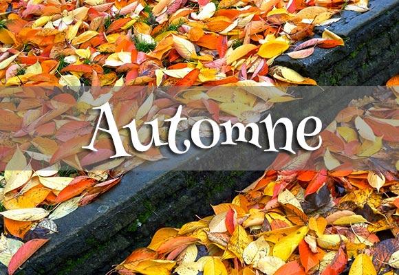 Concours Photo - Automne 2014