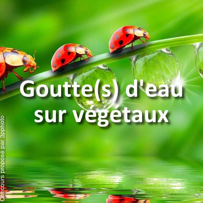 Concours Photo - Goutte(s) d'eau sur végétaux