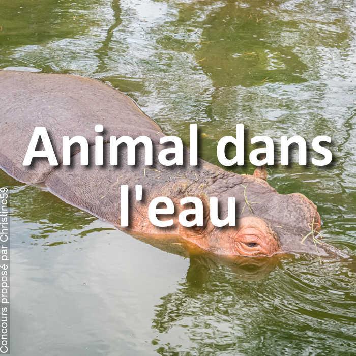Concours Photo - Animal dans l'eau