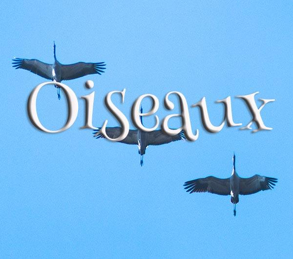 Concours Photo - Oiseaux