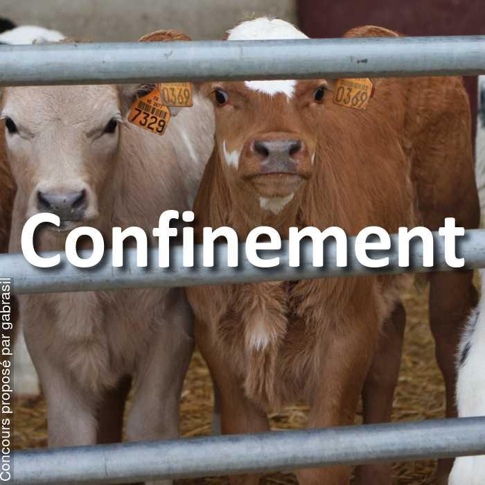 Concours Photo - Confinement