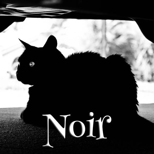 Concours Photo - Noir