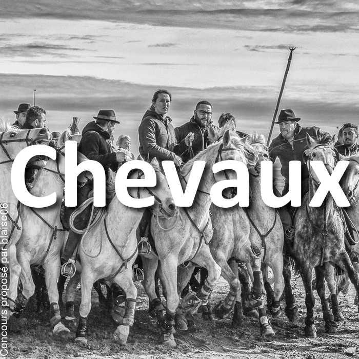 Concours Photo - Chevaux