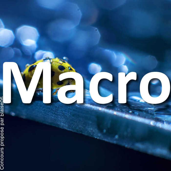 Concours Photo - Macro
