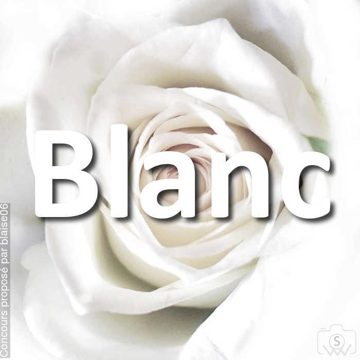 Concours Photo - Blanc