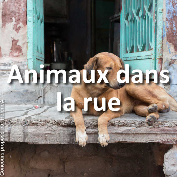 Concours Photo - Animaux dans la rue