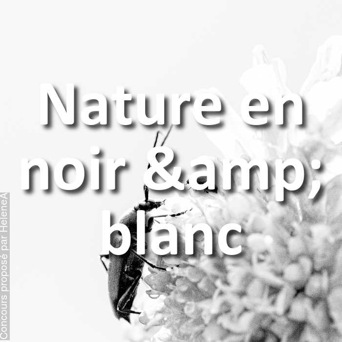 Concours Photo - Nature en noir & blanc
