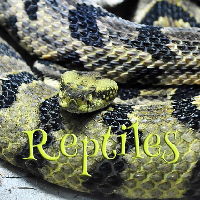 Concours Photo - Reptiles