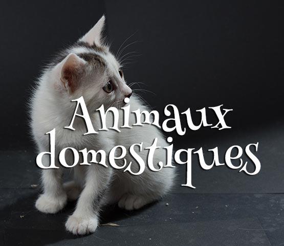 Concours Photo - Animaux Domestiques