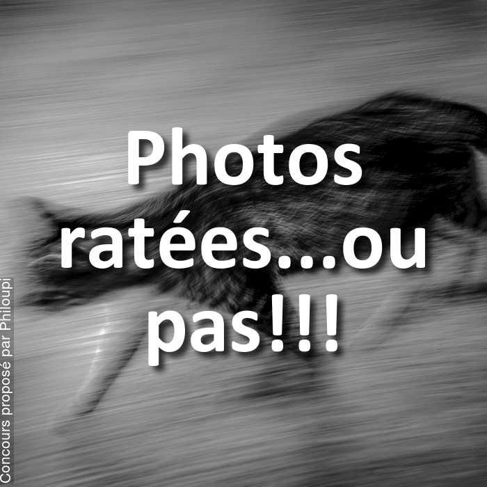 Concours Photo - Photos ratées...ou pas!!!