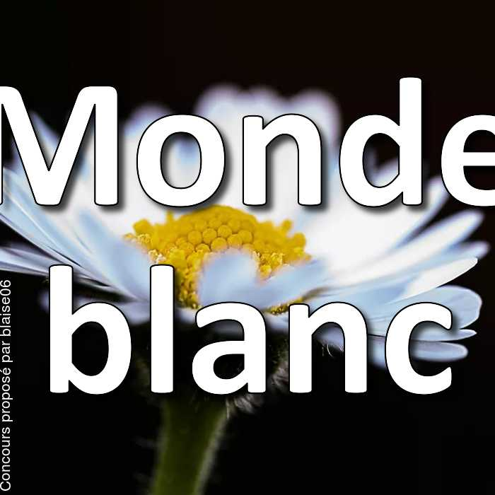 Concours Photo - Monde blanc