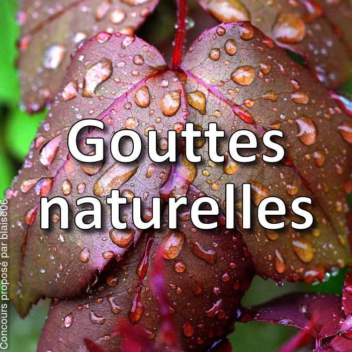 Concours Photo - Gouttes naturelles