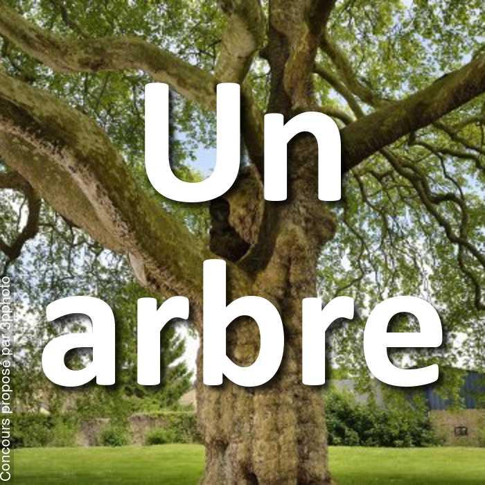 Concours Photo - Un arbre