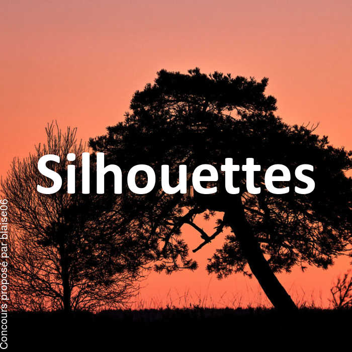 Concours Photo - Silhouettes