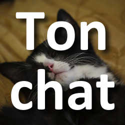 Concours Photo Ton chat