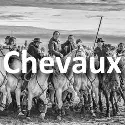 Concours Photo Chevaux