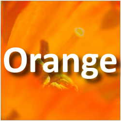 Concours Photo Orange