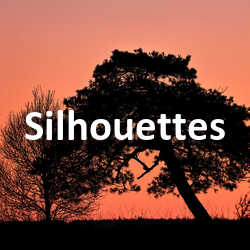Concours Photo Silhouettes